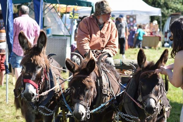 Attelages trois ânes de l'ami et voisin Georges