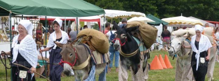Au Pré de mon âne et ses ânes en culotte