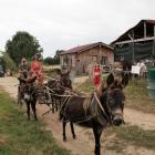 Attelage de Georges et ses trois ânes